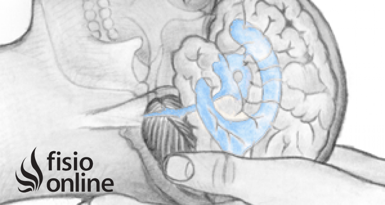 ¿Qué es el sistema craneosacro?