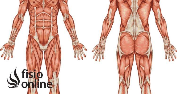 Lesiones más frecuentes que afectan al músculo