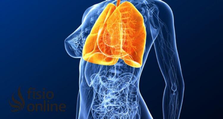 http://www.fisioterapia-online.com/sites/default/files/styles/post_image/public/image/fisioterapia-online-anatomia-sistema-respiratorio-pulmones-organos-b.jpg?itok=_0-SupT8