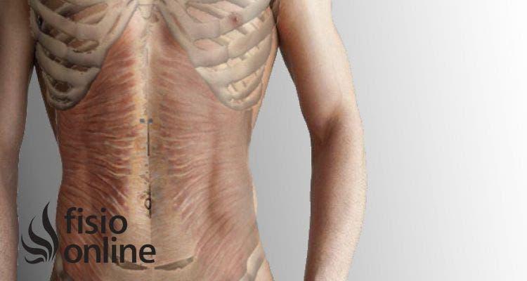 Músculo transverso del abdomen | Fisioterapia Online