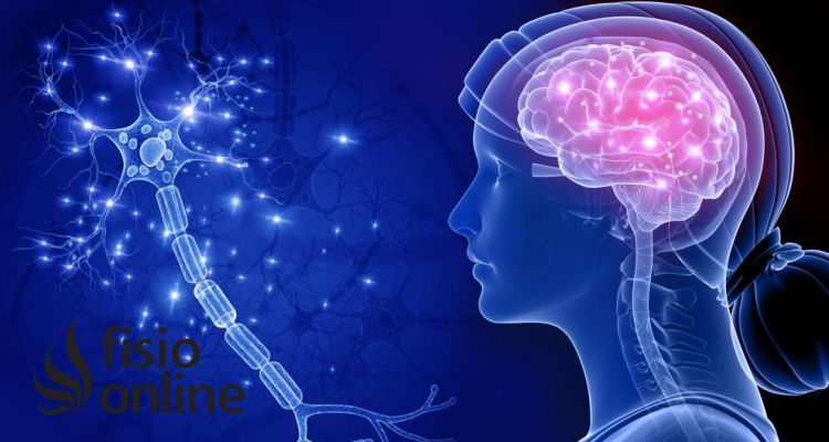 Señales que indican el Alzheimer y cómo la terapia con animales puede ayudar