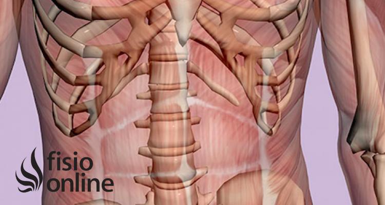 ¿Cómo repercute la disfunción cardiaca sobre el sistema Músculo-esquelético?