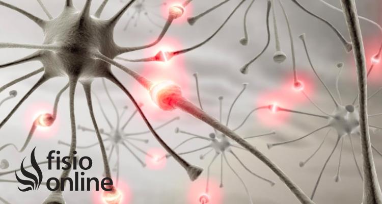 R.N.C: Reordenación Neurosensitiva Central