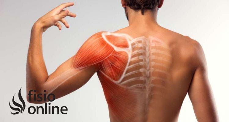 Ejercicios y estiramientos para evitar que aparezca el dolor de hombro