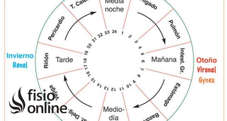 Usar el reloj orgánico para conocer mejor nuestro cuerpo
