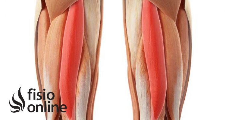 Readaptación ante una rotura de fibras del bíceps femoral de un futbolista (Parte I) | FisioOnline