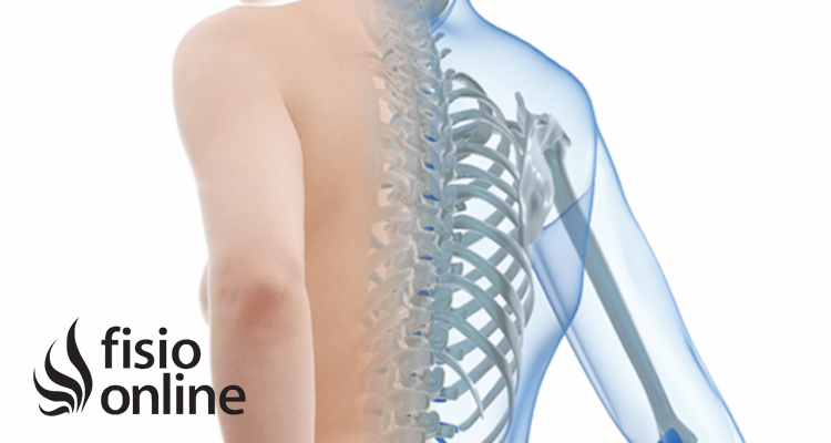 Osteoporosis ¿Un déficit de Calcio?