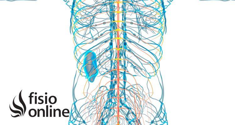 Importancia del Sistema Nervioso