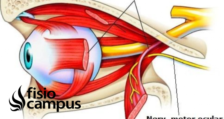 nervio abducens