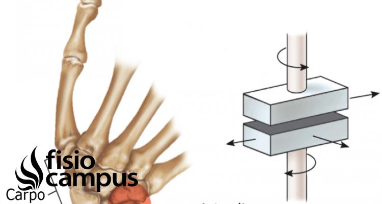 articulación de tipo artrodia