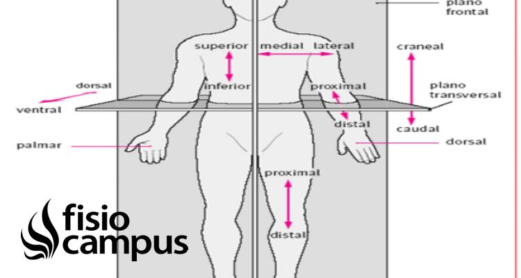 zona caudal
