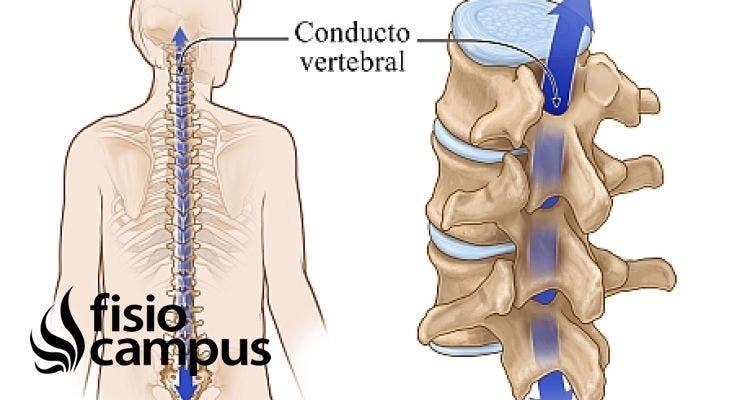 conducto vertebral