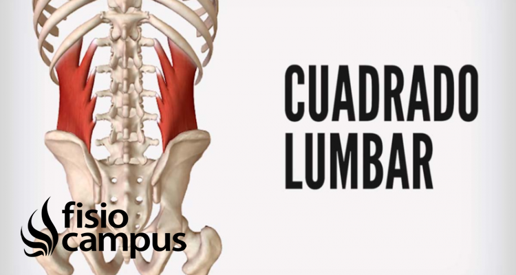 Músculo cuadrado lumbar