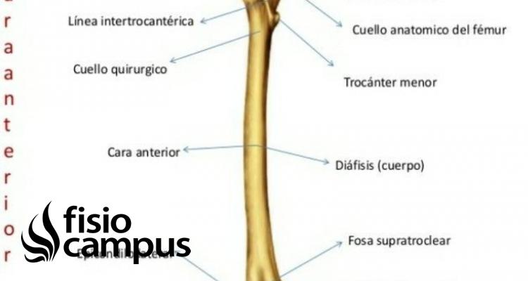 Cuello del fémur