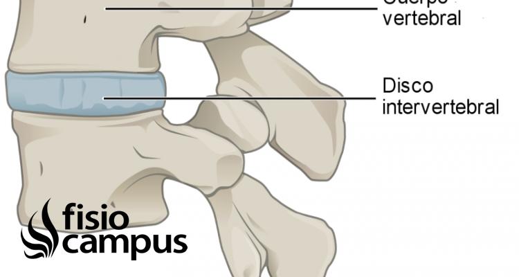 Cuerpo vertebral