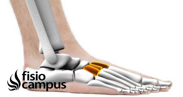 Huesos Cuneiformes