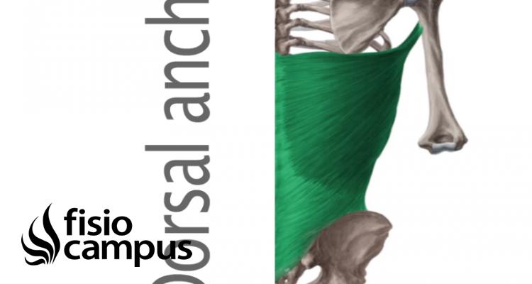 Músculo Dorsal Ancho