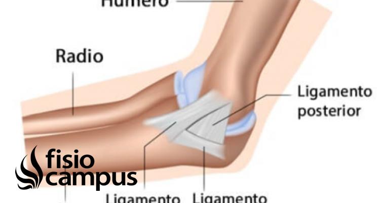 Articulación humerocubital