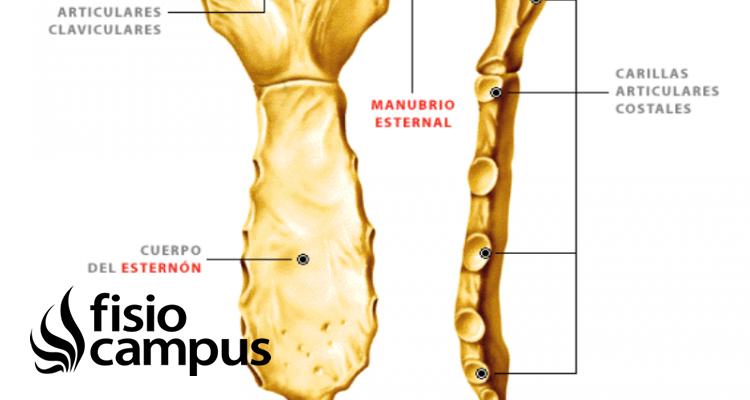 articulación manubrioesternal