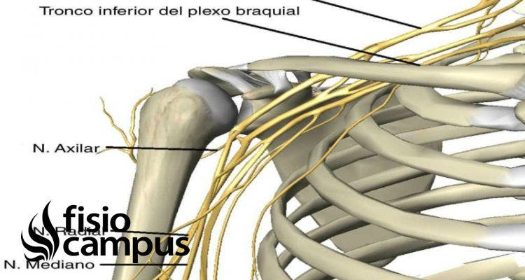 nervio axilar