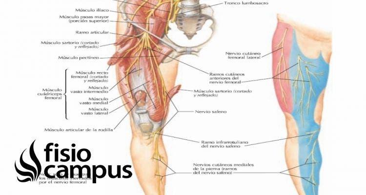 nervio cutáneo femoral