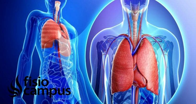 síndrome de distrés respiratorio