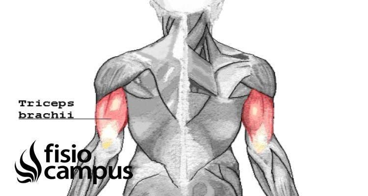 Tendón del tríceps