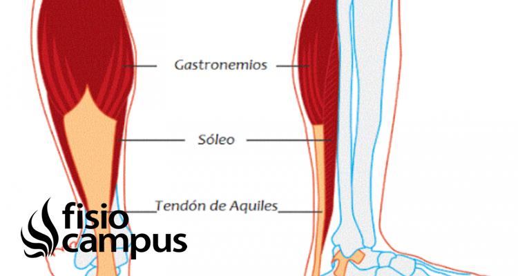 Músculo tríceps sural