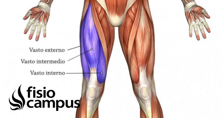 músculos vasto interno y externo