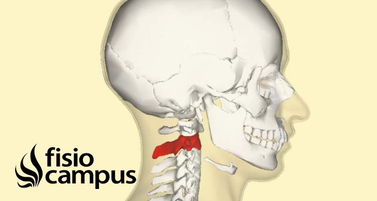 Vértebra Axis