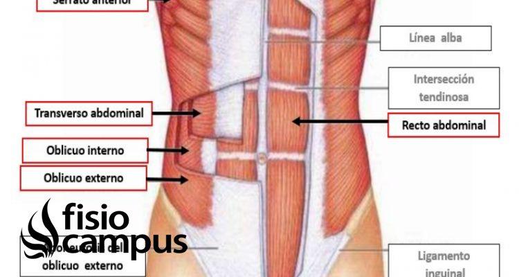 Aponeurosis del abdomen
