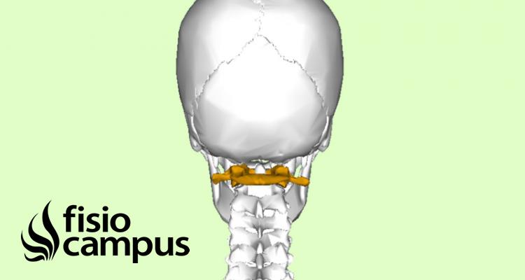 Vértebra Atlas