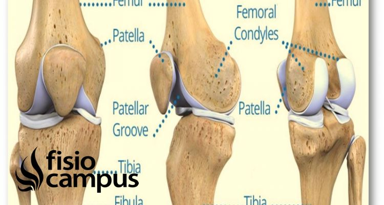 articulación femoropatelar