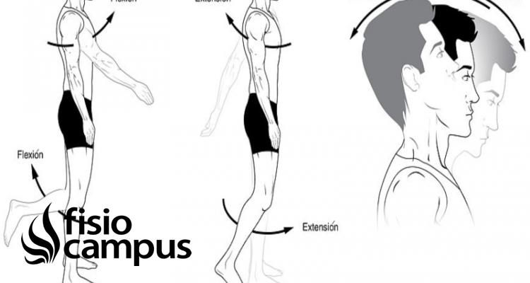 flexión articular