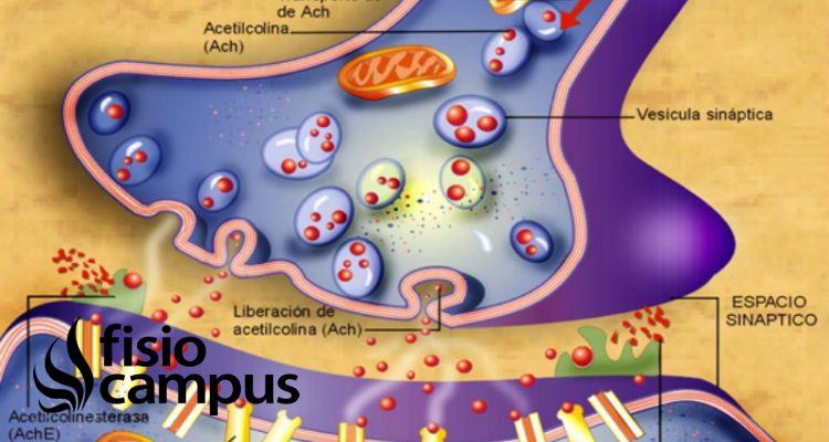 inhibición sináptica