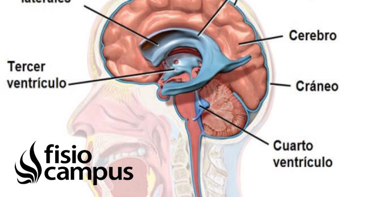 Líquido cefaloraquídeo