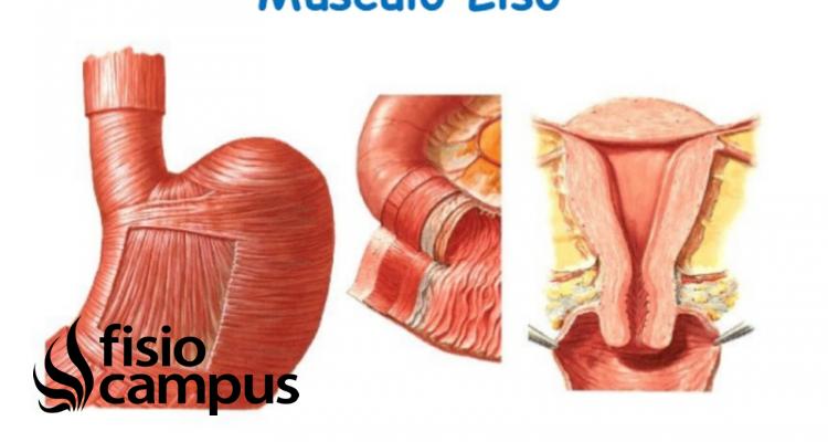 Músculo Liso