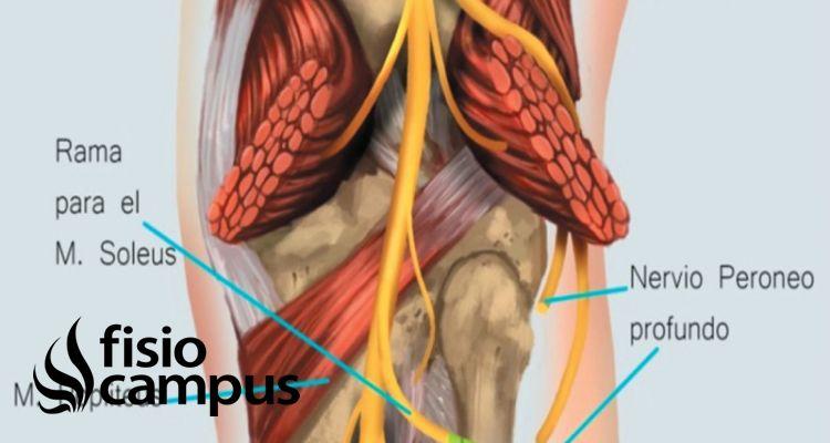 nervio tibial posterior