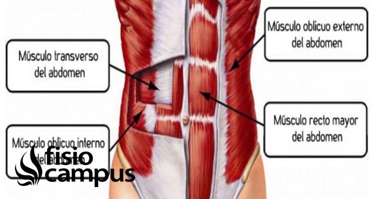 músculo oblicuo interno
