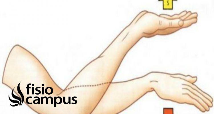pronación del antebrazo