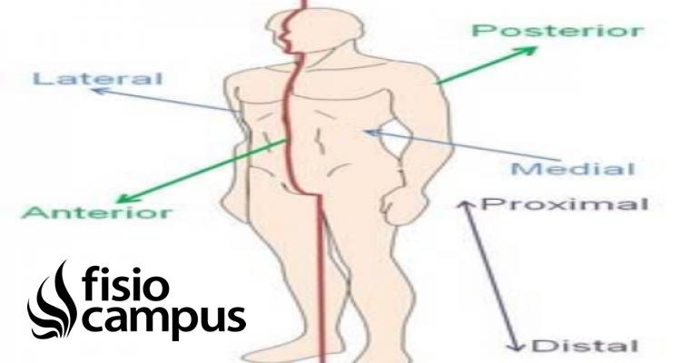 zona proximal