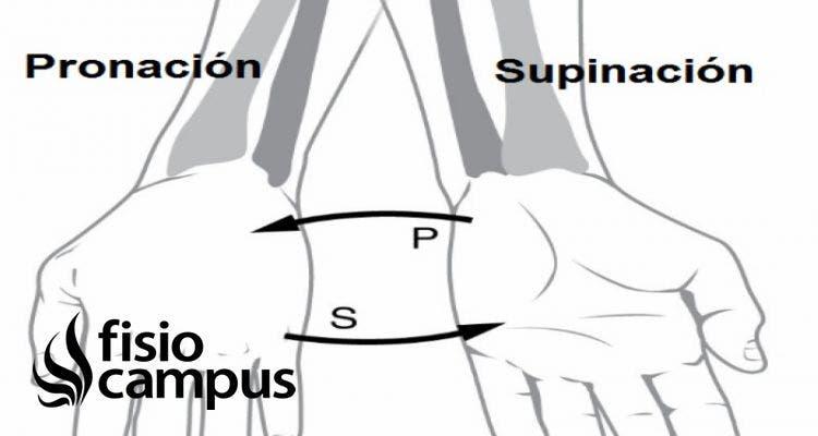 supinación del antebrazo
