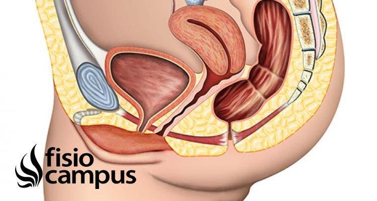 ¿Qué es la Incontinencia urinaria? ¿Cómo se trata?