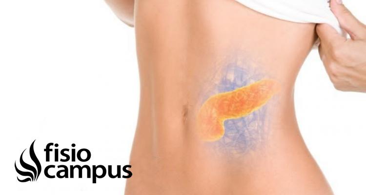 ¿Cómo repercute la disfunción de bazo-páncreas sobre el sistema Músculo-esquelético?
