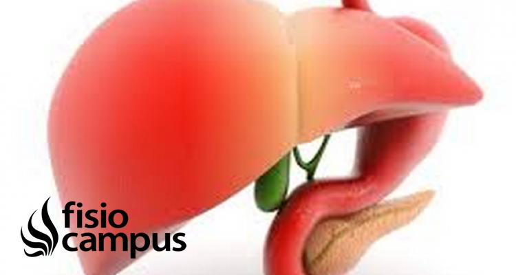El hígado y la salud de todo el organismo