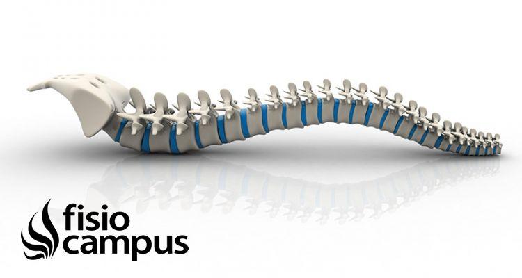 Estructura y funciones de la columna vertebral