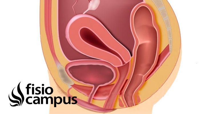 Anatomía de los Hipopresivos