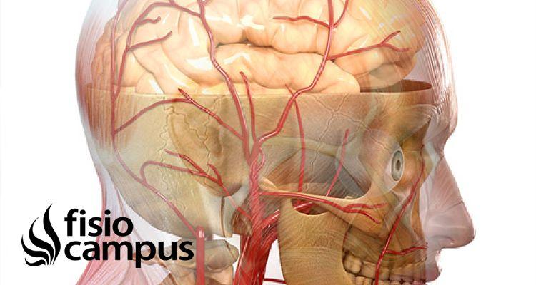 Qué es la Fisioterapia Neurológica y cuáles son sus aplicaciones