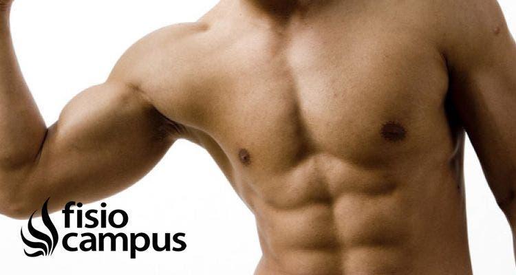 Tipos de contracciones musculares. Características y usos en tratamientos de fisioterapia