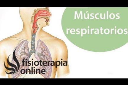 Músculos respiratorios  Autoevaluación y entrenamiento desde la visión de la fisioterapia respi